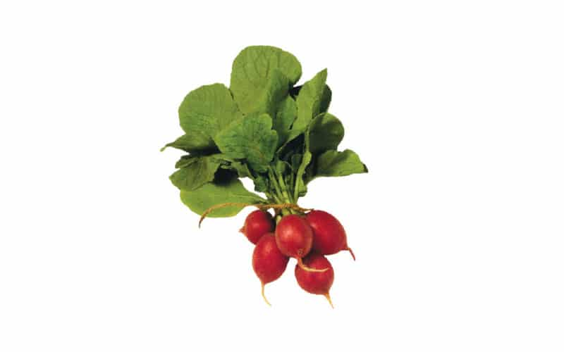 Co-op Sales Local Oregon Organic Red Radishes
